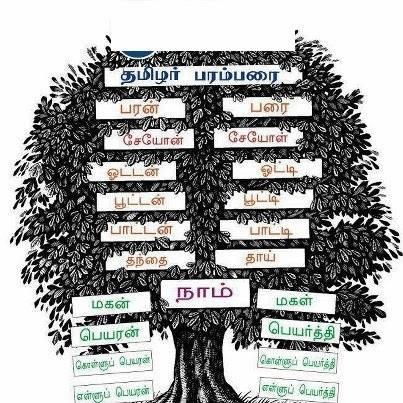 வியத்தகு தமிழர் தலைமுறை கணக்கீடு